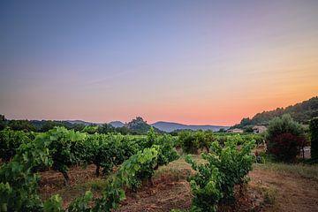 Coucher de soleil sur les vignes sur Michel de Jonge