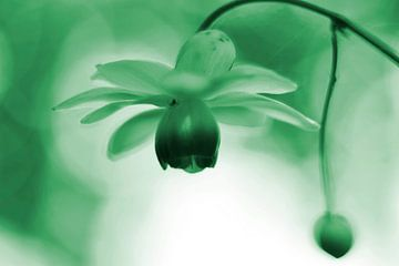 Lantaarntje met spinnetje groen  vintage von Sascha van Dam
