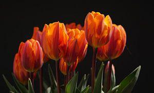 Tulpen, rood-geel van