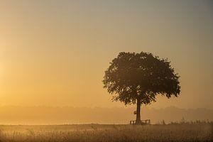 zacht ochtendgloren in volle glorie van ina van zandwijk