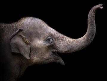 Elefant von Karel Ton