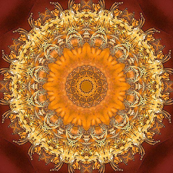 Kryddað hunang van Frans Blok