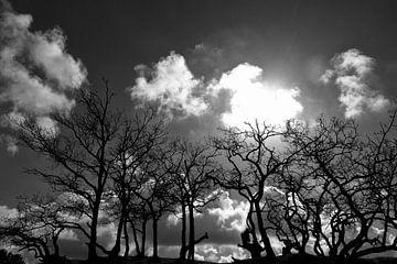 Bomen in tegenlicht van Bob Bleeker