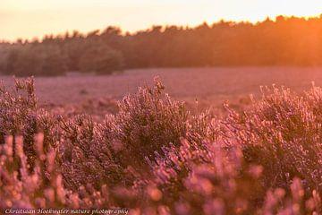 Ondergaande zon op de heide van Christiaan Hoekwater