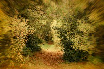 Herfst impressie van Irene Lommers