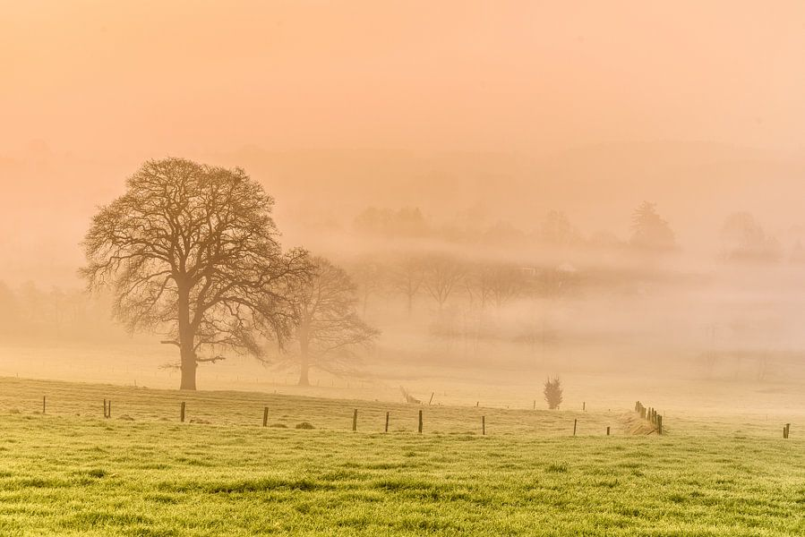 Foggy Morning van Ellen van den Doel