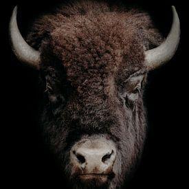 Stoere bizon portret van een Wisent van John van den Heuvel