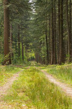 Waldweg - Portrait von Leo Kramp Fotografie