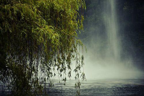 De treurwilg en de fontein