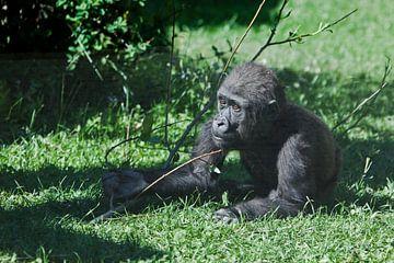 Fragende Neugierde und eine ausgestreckte Hand wie auf die Bitte eines niedlichen kleinen Gorillajun von Michael Semenov