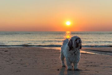 Hond poseert op het strand van Richard Steenvoorden