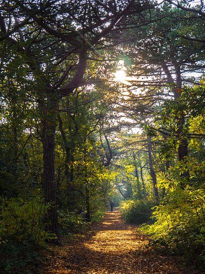 een persoon op een bospad