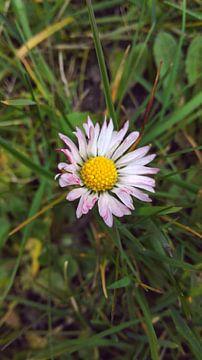 bloem van S C