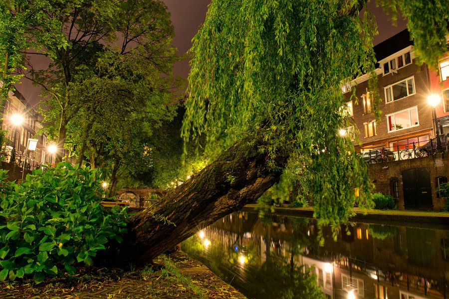 Utrecht Oudegracht: Treurwilg bij Geertebrug