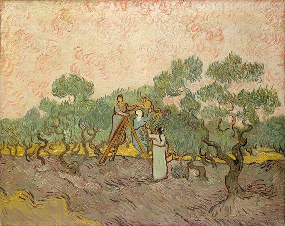 Vrouwen olijven plukken, Vincent van Gogh van Meesterlijcke Meesters