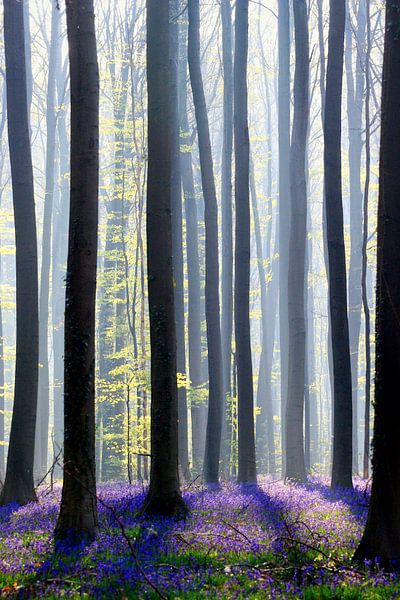 magic in the forest... morninglight van Els Fonteine
