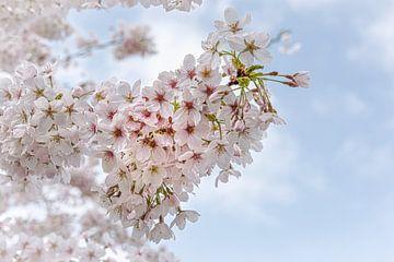 Blüte im Frühling von Rietje Bulthuis
