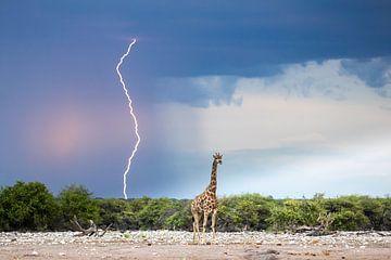 Malerischer Himmel mit Blitz und Giraffe von Sharing Wildlife