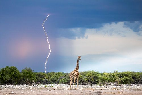 Schilderachtige lucht met bliksem en giraf