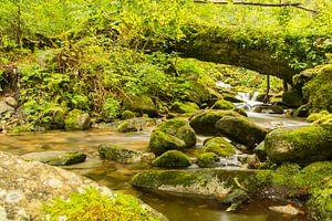 Bergrivier in Roemenië van
