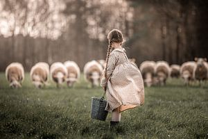 schaapjes van Elke De Proost