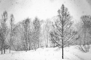 Zwart wit bomen en sneeuw in Japan van
