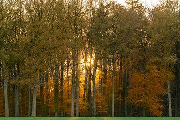 Herbst im Wald von Jeroen Kleiberg