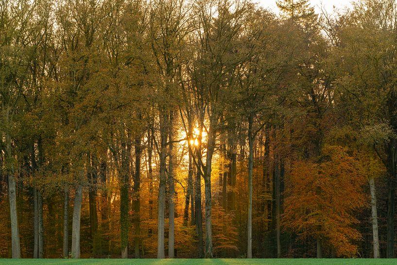 Herfst in het bos van Jeroen Kleiberg