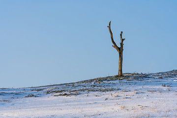 Boom op besneeuwde helling van zeilstrafotografie.nl