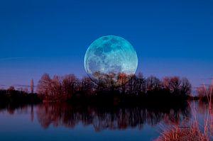 Luna arborum a tergo van