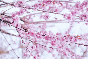 The pink blossom van Elianne van Turennout