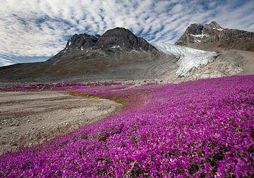 Gletscher über Blumenwiese von Wilco & Casper