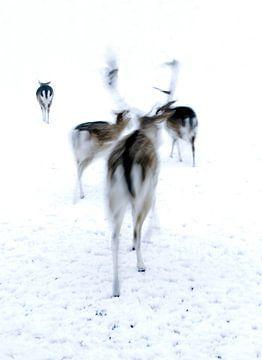 Rehe auf der Flucht im Schnee. von Therese Brals
