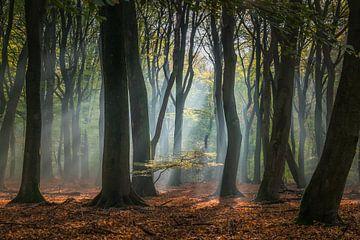 Zonlicht in het Speulderbos van Niels Barto