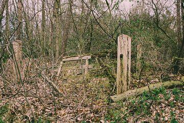 Vervallen houten hek overgroeid door een bos van TwentePics