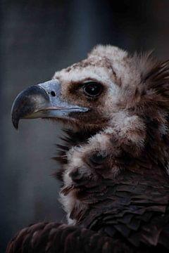 het hoofd van de nek is een close-up, een enorme snavel en zwarte trieste ogen. van Michael Semenov