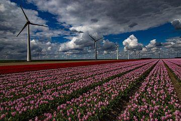 Tulpenfelder mit modernen Windmühlen von Anne Ponsen
