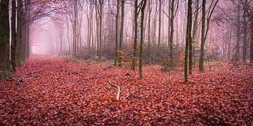 Wandeling in de herfst van Marcel Pietersen