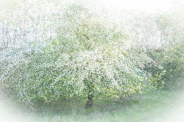 Bloeiende appelboom van Guido Rooseleer