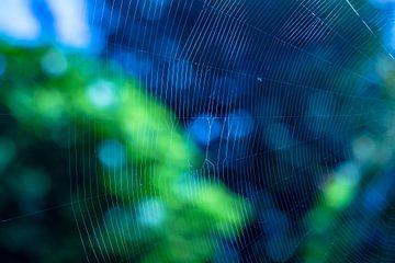 Spinnennetznahaufnahme mit grünem und blauem Bokeh von Gea Gaetani d'Aragona
