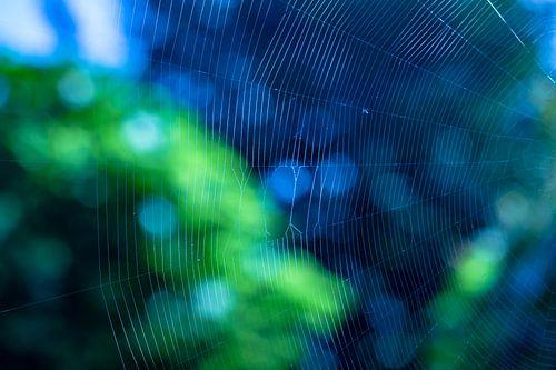 Spinnewebclose-up met groene en blauwe bokeh van Gea Gaetani d'Aragona