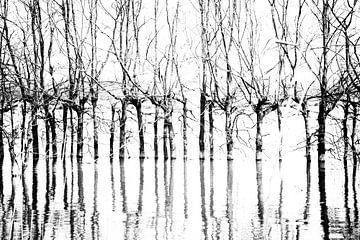 Bomen in Biesbosch van