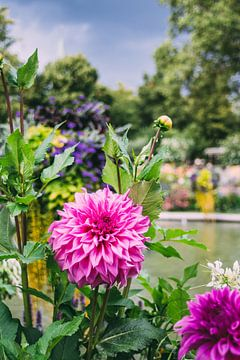 Pinke Blumen von Patrycja Polechonska