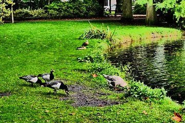 Utrecht - Wilhelminapark ganzen van Wout van den Berg