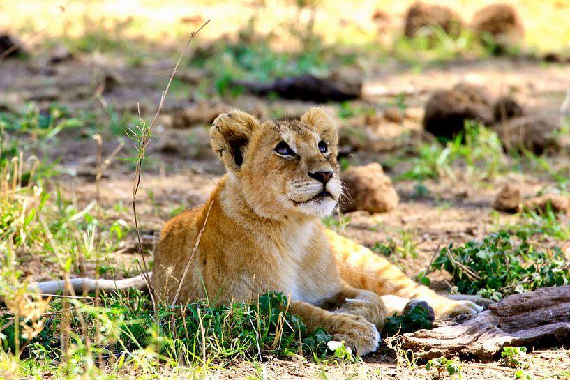Träumendes Löwenjunges in der Serengeti von Daphne de Vries