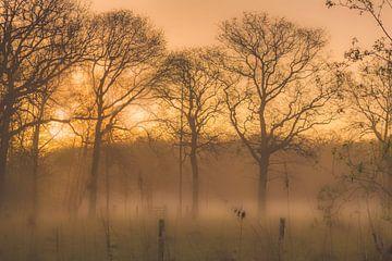Sonnenaufgang Peerdsbos von Maarten Visser