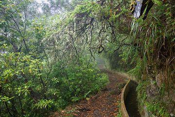 Weelderig bos von Michel van Kooten