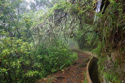 Weelderig bos van Michel van Kooten