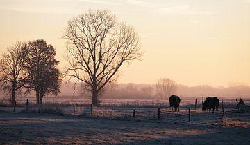 Hollands landschap bij ochtendgloren van Johan Michielsen