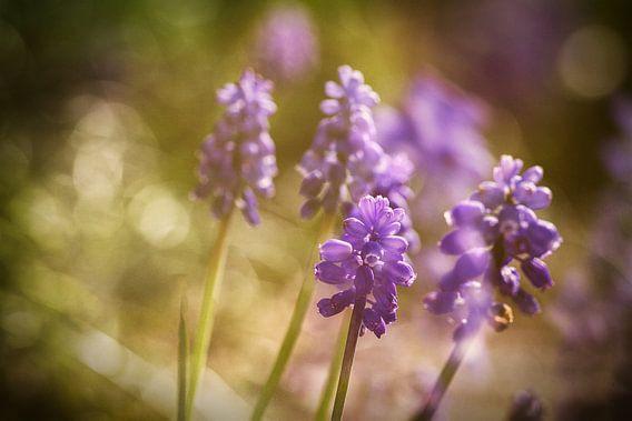 Wonderful in purple van Theo Bakker